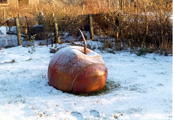 Jannie Benthem, Appel in snow