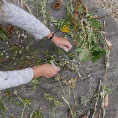 Planten verzameld voor relief